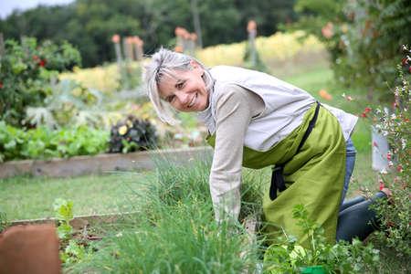 Senior woman planting aromatic herbs in kitchen garden