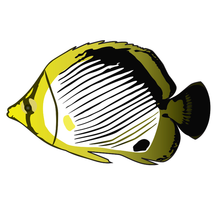 Tropical fish ButterflyFish (Chaetodon). Vector