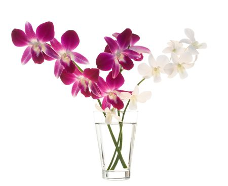 Bouquet of orchids in vase isoladet on white background
