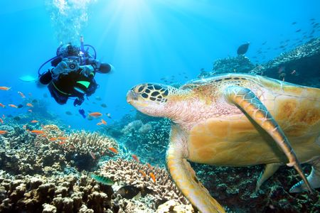 Green turtle underwater and diver. Sipadan. Celebes sea