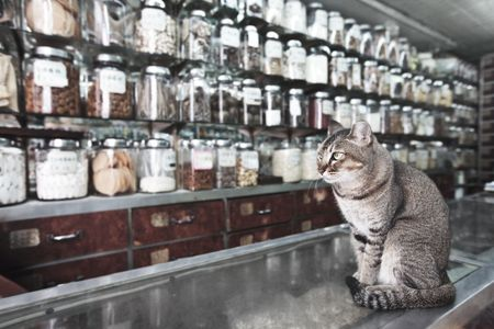 Cat like a seller in traditional Chinese medicine and dried goods shop