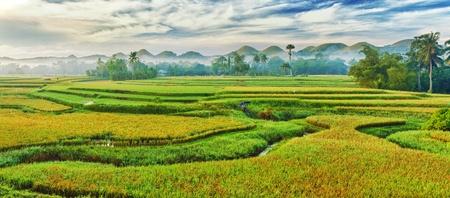Foto de Panorama of the paddy rice field. Philippines - Imagen libre de derechos