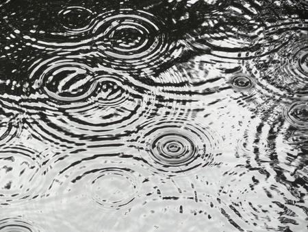Rain ripples on pond making circular patterns
