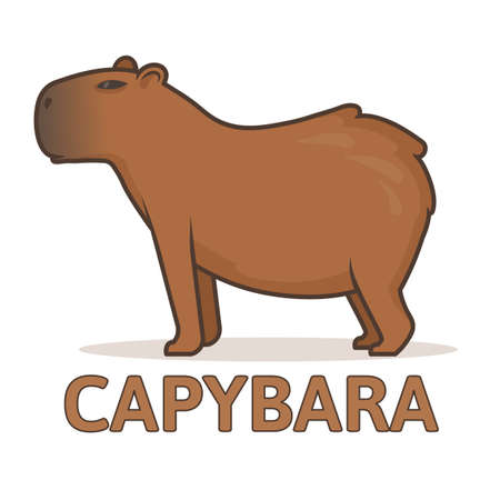 Illustration pour Cute capybara on a white background. Colorful flat vector illustration with outline, isolated. - image libre de droit