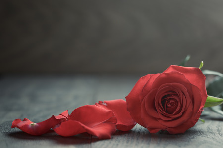 Red rose with petals on wood tableの写真素材