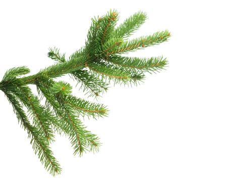 Foto de Fresh spruce green branch isolated on white background - Imagen libre de derechos