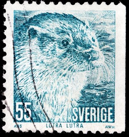 SWEDEN - CIRCA 1973  a stamp printed by SWEDEN shows  Eurasian River Otter  Lutra lutra , circa 1973