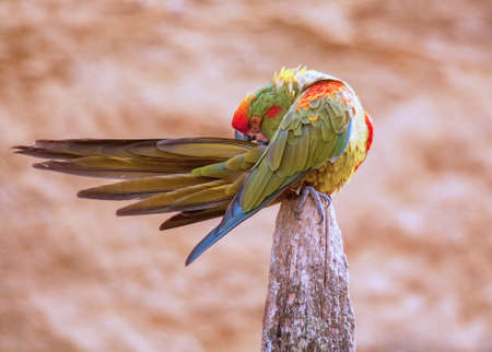 Wholesale green macaw grooming current plan