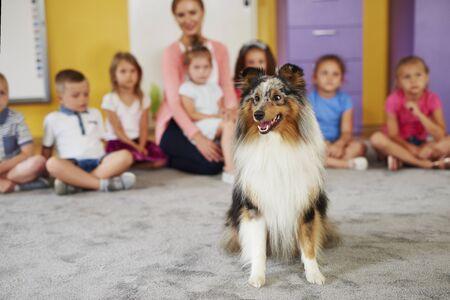 Photo pour Happy shetland sheepdog in the preschool - image libre de droit