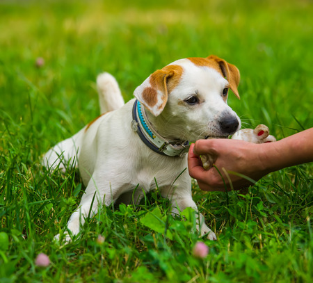 female hand stroking the dog in a city park, the summer season