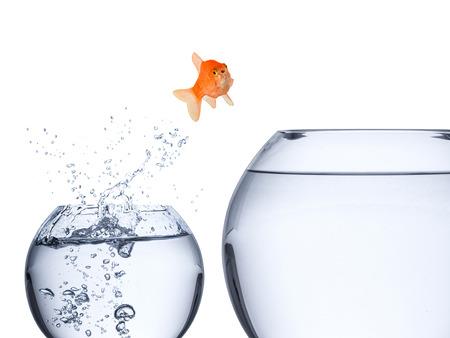 Aufstiegskonzept mit Fisch