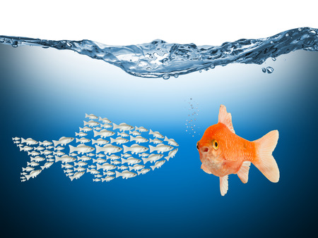 teamwork conecpt with fishes