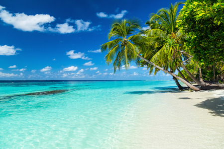 Photo pour coco palms on paradise beach - image libre de droit