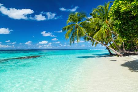 coco palms on paradise beach