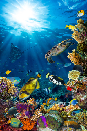 Photo for underwater coral reef landscape in the deep blue ocean with colorful fish and marine life - Royalty Free Image