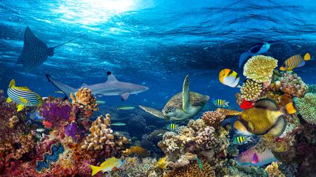 Foto de underwater coral reef landscape 16to9 background  in the deep blue ocean with colorful fish and marine life - Imagen libre de derechos