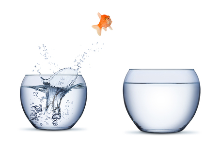 Photo pour gold fish change move career opportunity rise concept jump into other bigger bowl isolated on white background - image libre de droit
