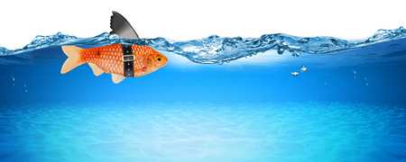 goldfish with fake shark fin creative business idea innovation concept isolated on blue panorama underwater background
