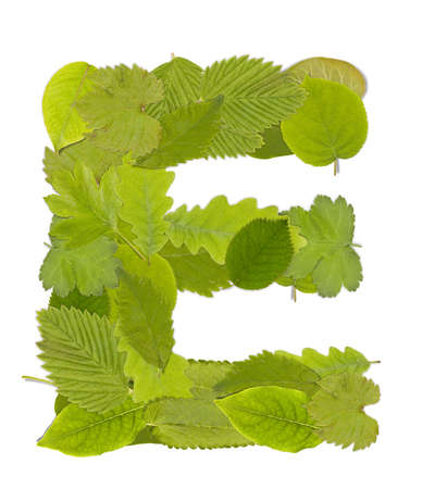Green leaf  font in white. Letter E