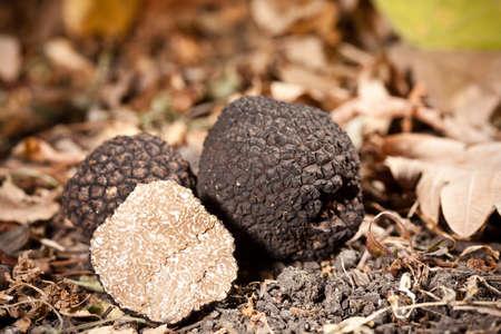 Photo pour Black truffles tuber on leaves - image libre de droit