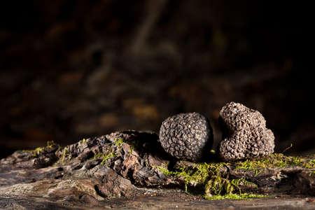 Photo pour Black truffles tuber on crust - image libre de droit
