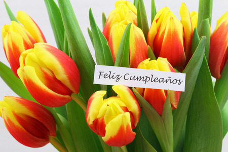 Feliz cumpleanos Happy birthday in Spanish card with colorful tulips