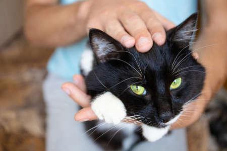 Photo pour a guy strokes the head of a cat lying on his palm - image libre de droit