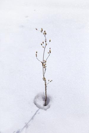 Grassflowerhead180700308