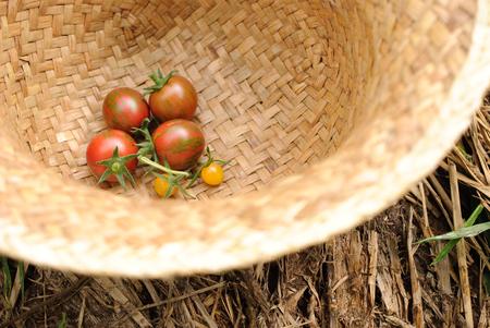 Grassflowerhead180700389