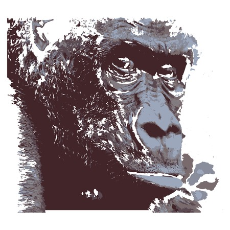 Creative drawing gorilla. Art inspires people. This drawing of a monkey is a great design for the graphic design. Artistically inspired the illustration.