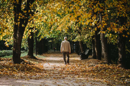 Elderly man walks alone in autumn park