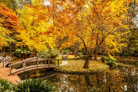 Photo pour Scenic pond with wooden bridges in Autumn in Australia - image libre de droit