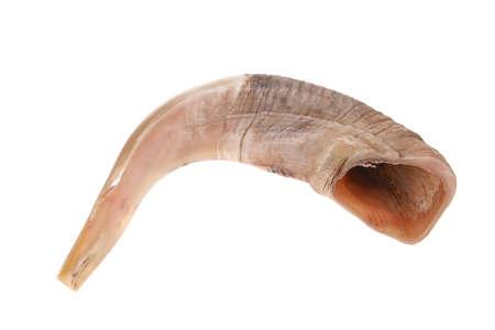 ram horn ( shofar ) isolated over white background