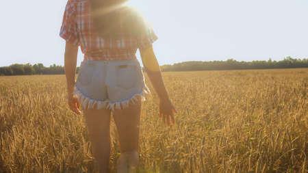 Foto de Womans hand slide through wheat in sunset light on a golden field. - Imagen libre de derechos