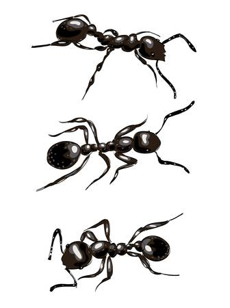 Black ants. Isolated on white background. Vector illustration.