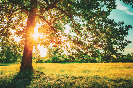 Foto de Summer Sunny Forest Trees And Green Grass. Nature Wood Sunlight Background. Instant Toned Image - Imagen libre de derechos