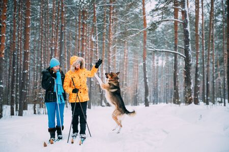 Photo pour Two Active Young And Adult Caucasian Women Have Fun Are Skiing And Playing With Dog In Winter Snowy Forest. Active Healthy Lifestyle On Winter Nature - image libre de droit