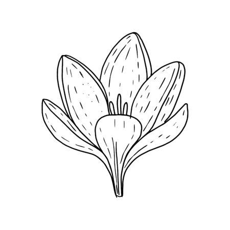 Illustration pour Crocus flower in Doodle style.Crocus Bud black and white image.Coloring.Outline image by hand.Vector illustration - image libre de droit