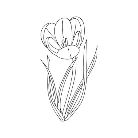 Illustration pour Crocus outline drawing.The first spring flowers in the Doodle style.Black and white image.Coloring of flowers.Floristics for decoration, postcards, weddings, birthdays.Vector illustration - image libre de droit