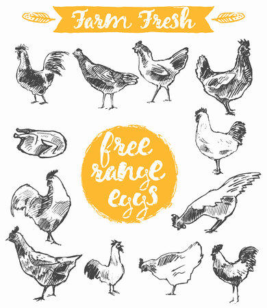 Illustration pour Set of a hand drawn chickens, label for a free range chicken and eggs, farm fresh chicken meat,  illustration - image libre de droit