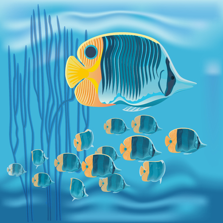 Vector a colorful tropical copperband butterflyfish, Chelmon rostratus on blue background