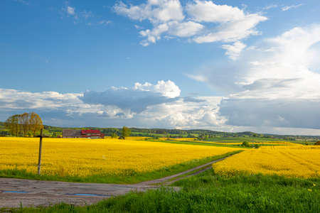 Photo pour Rapeseed - yellow rapeseed flowers, roadside cross - agricultural landscape, Poland, Warmia and Mazury - image libre de droit