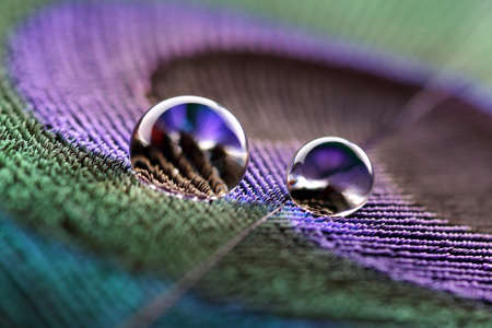 Foto de Water droplets on peacock feather - Imagen libre de derechos
