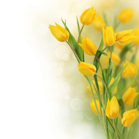 Photo pour Tulip flowers border with copy space    - image libre de droit