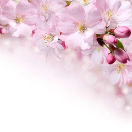 Pink spring flowers design border background