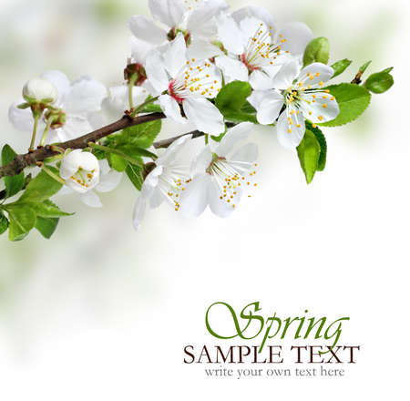 Photo for Spring flowers design border background - Royalty Free Image