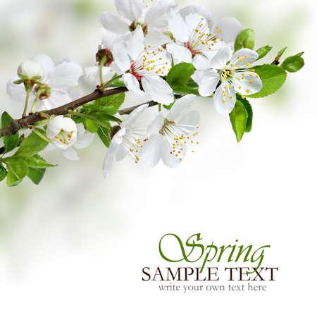 Spring flowers design border background