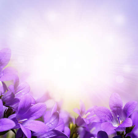 Photo for Campanula, purple spring flowers background - Royalty Free Image