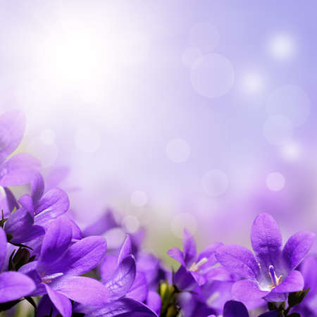 Photo for Abstract purple spring flowers background - Royalty Free Image