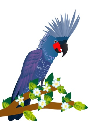 Exotic birds. A parrot sits on a tree branch with a blossoming flower.